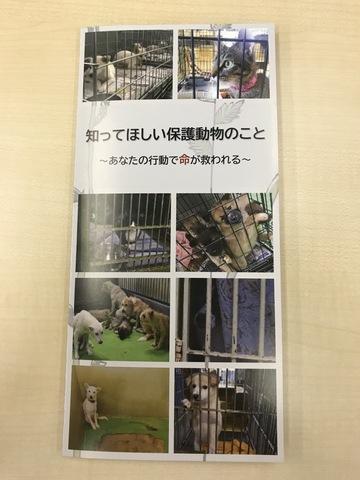 IMG_8219[1].JPG